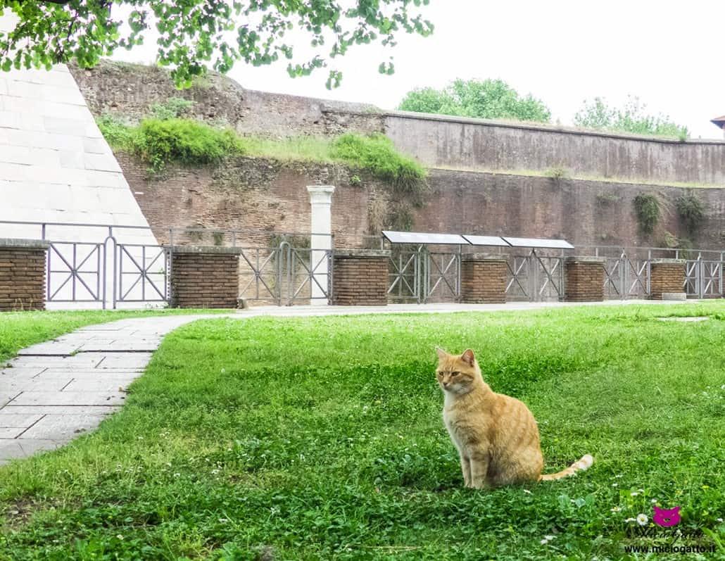i gatti della piramide