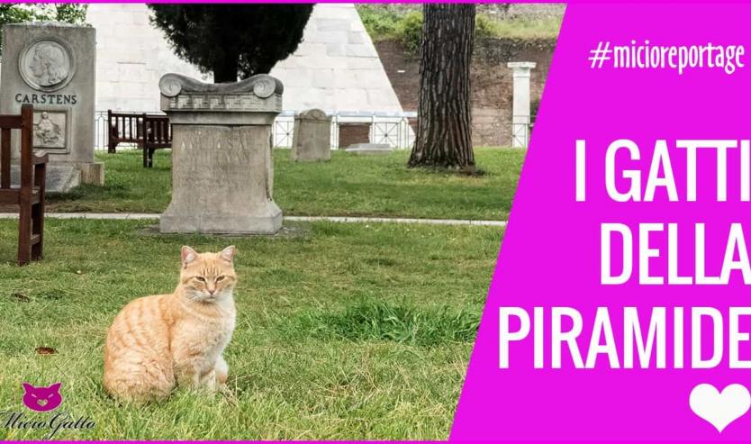 i gatti della piramide colonia felina roma