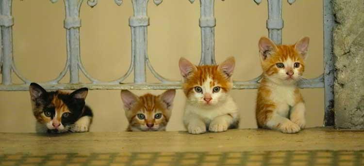 kedi film la citta dei gatti wanted cinema italia