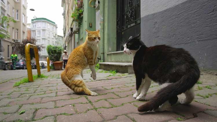 kedi film italia