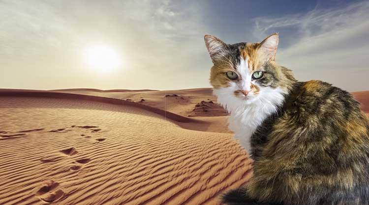 sabbia gatti cats best