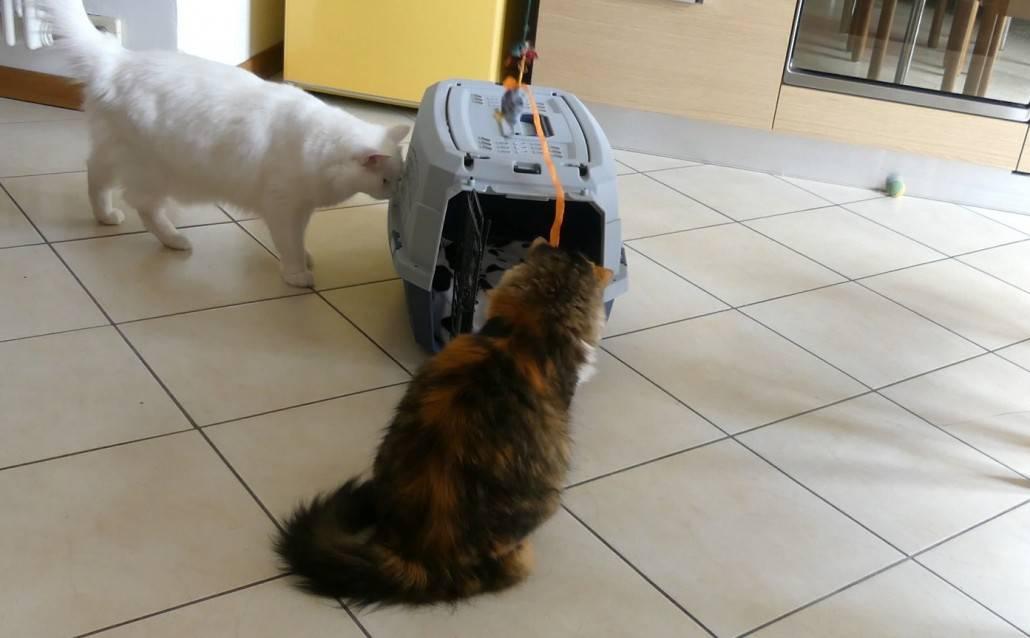 trasportino per gatti amazon basics recensione