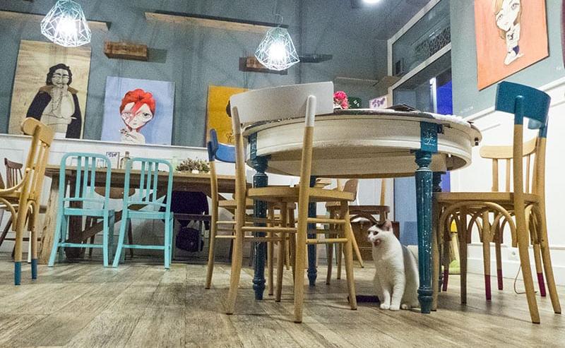 Romeow Cat Bistrot il ristorante dei gatti a Roma