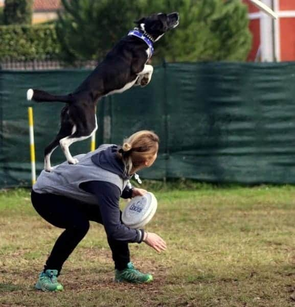agility dog a follow your pet firenze 2018