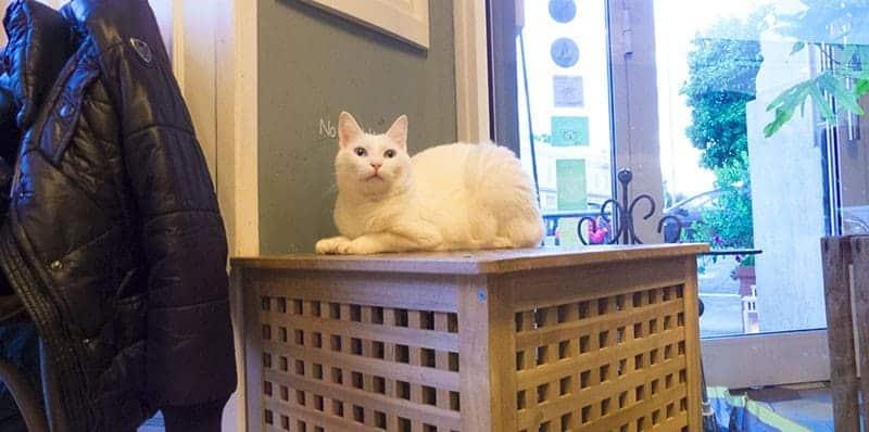recensione bar dei gatti roma