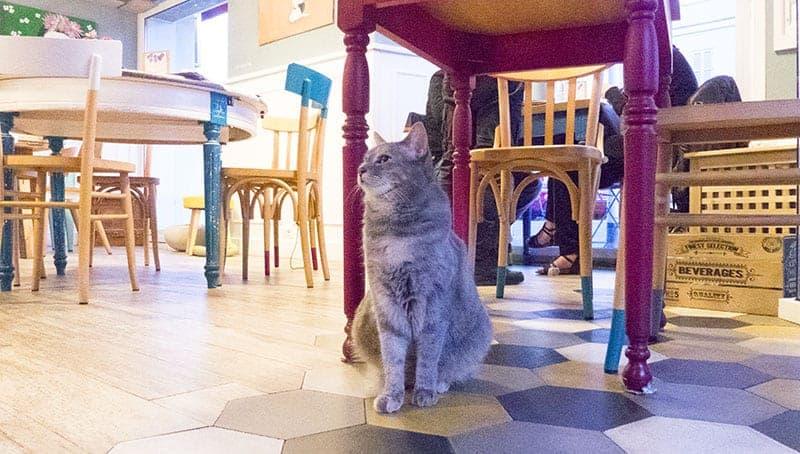 romeow cat bistrot gatti roma