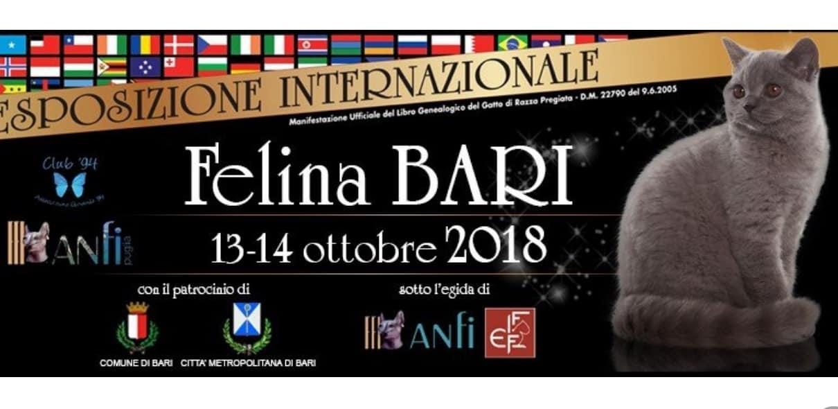 Esposizione Felina Bari 2018