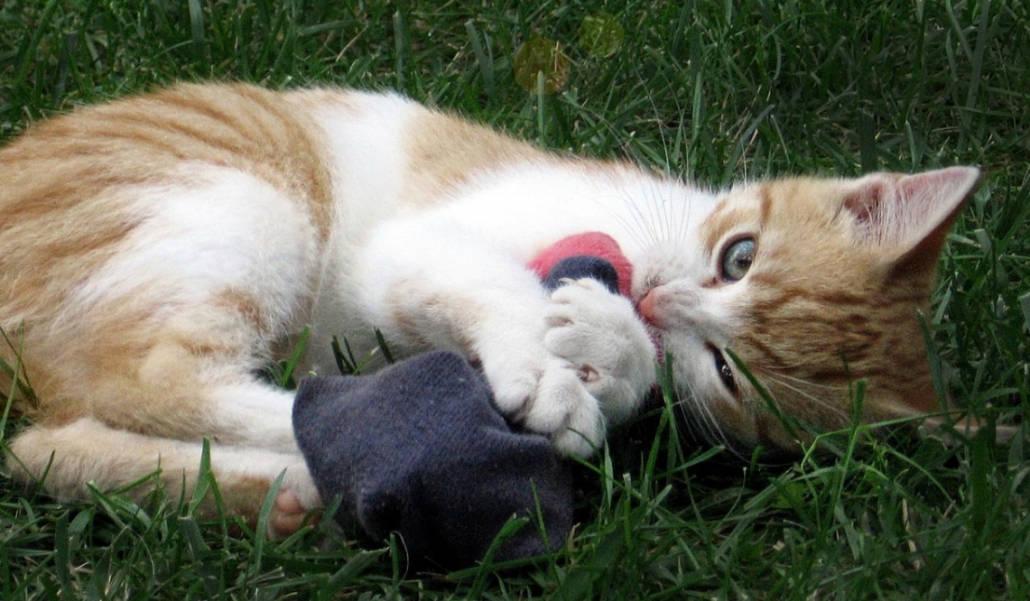 Giochi Per Gatti Online Gli Shop Migliori Miciogattoit