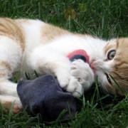 Giochi per gatti online gli shop migliori