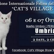 esposizione felina di perugia 2018 cat s village show