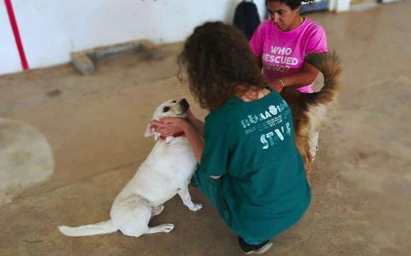 vacanze volontariato animali