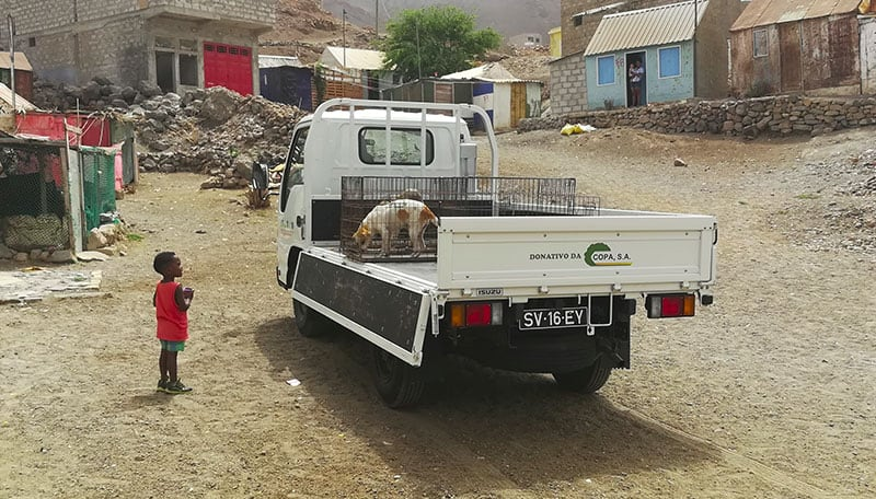 volontariato animali africa