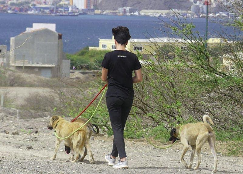 volontariato con animali