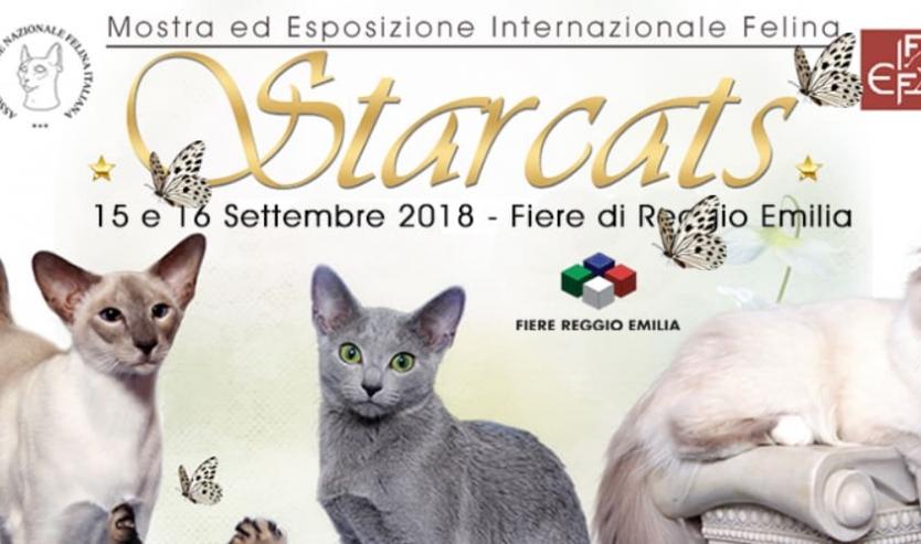 esposizione felina reggio emilia starcats 2018