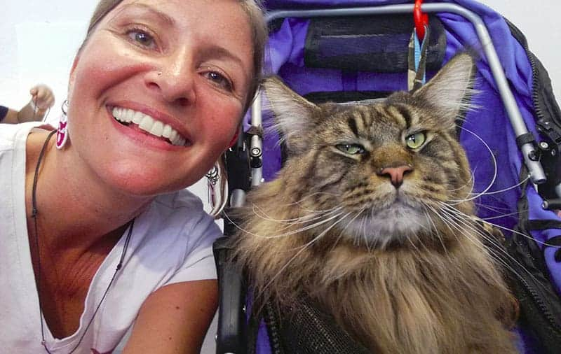 gatto piu grande del mondo barivel