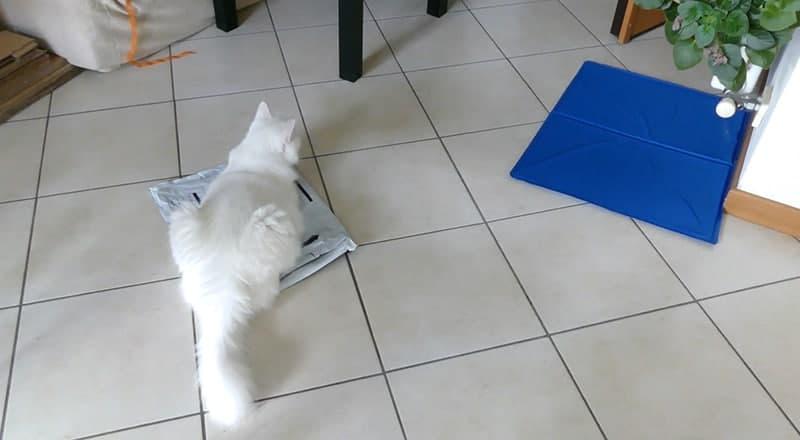 tappetino refrigerante animali
