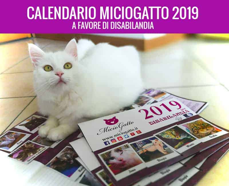 calendario miciogatto 2019 a favore di disabilandia