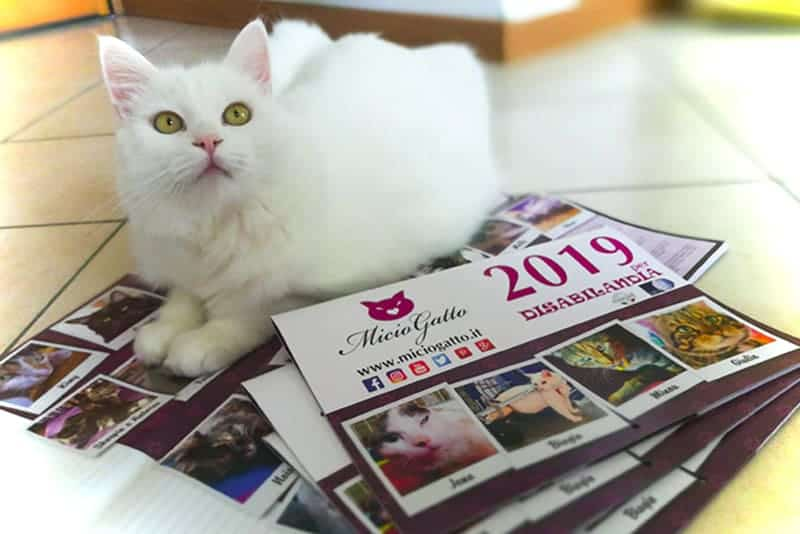 calendario miciogatto 2019 oscar bello