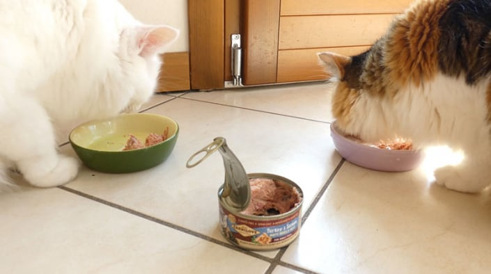 carnilove umido gatto