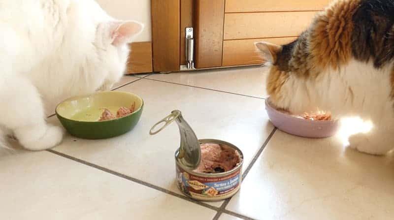 carnilove gatto opinioni recensione
