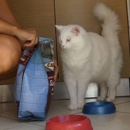 carnilove crocchette gatto