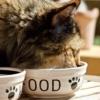 Cibo preferito dei gatti come il gatto si cibo in natura