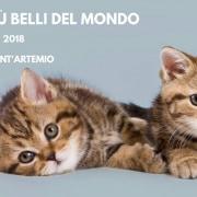 Esposizione Internazionale Felina Treviso 2018