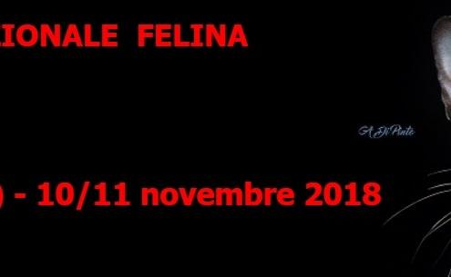 Esposizione felina Anfi Chatillon Aosta 2018