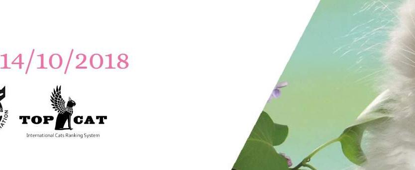 Expo Felina Internazionale Forlingatto Forli 2018