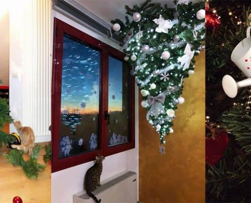 Gatto e albero di Natale la vera Soluzione