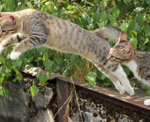 Storia e origini del gatto