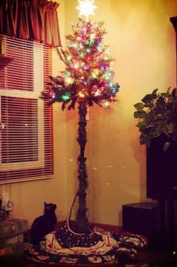 alberi di natale e gatti