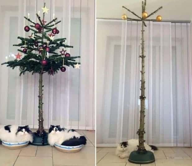 albero natale gatti