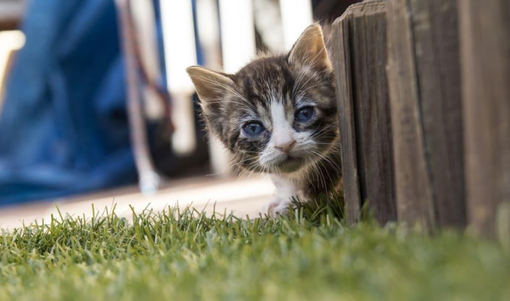 Calendario Eta Gatti.Crescita Del Gatto Le Fasi Di Sviluppo Miciogatto It