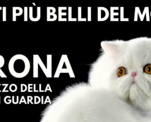 esposizione felina enfi verona 2018