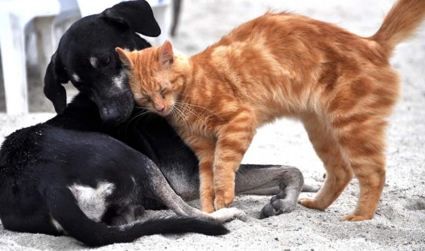 feromoni per gatto