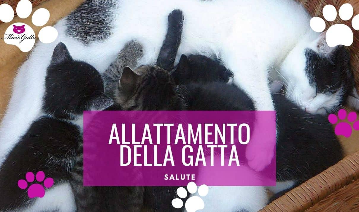 gatta che allatta allattamento gattini consigli