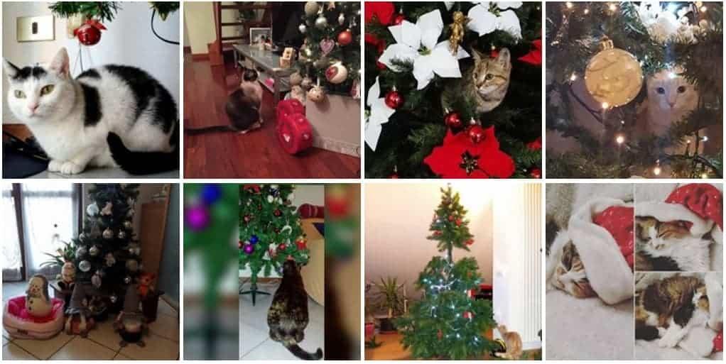 gatti e albero di natale