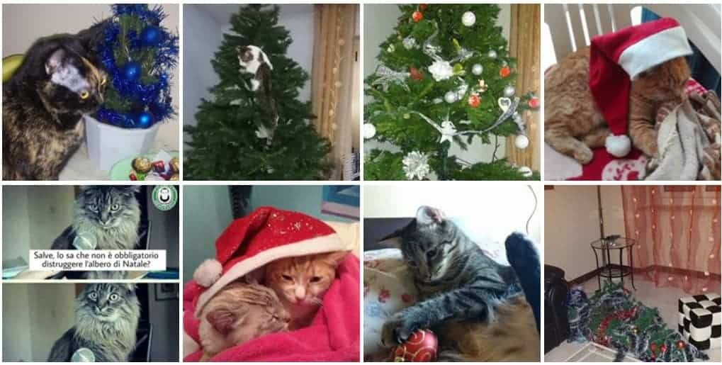 gatto e albero di natale
