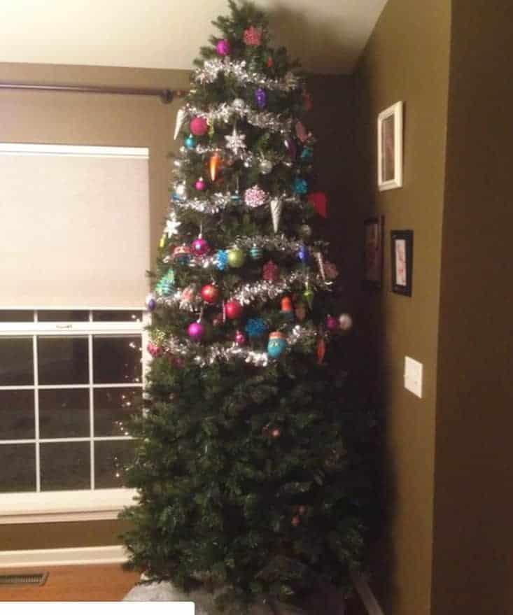 il gatto e l'albero di natale
