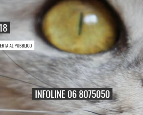 mostra felina super cat show roma 2018