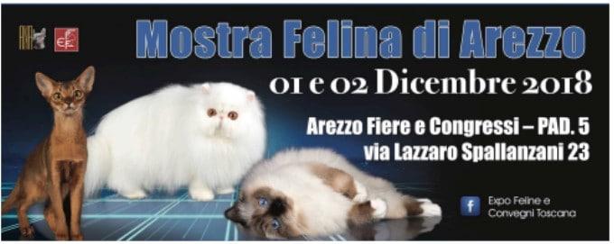 Esposizione Internazionale Felina Arezzo 2018
