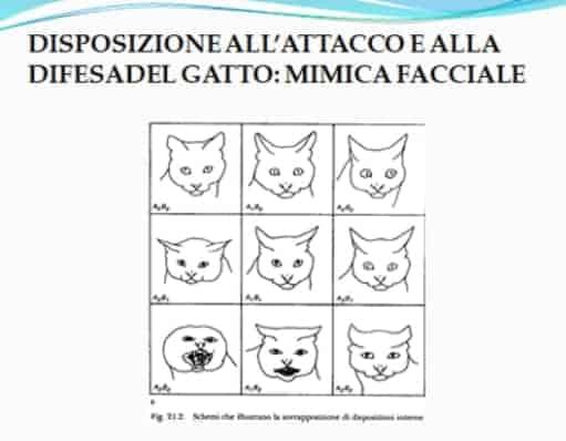 gatto che soffia mimica facciale