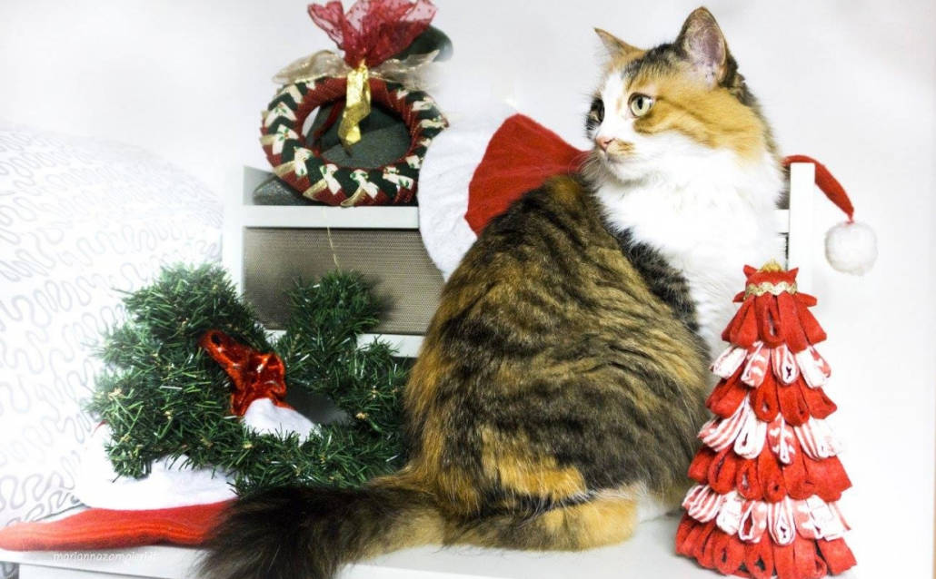 Albero Di Natale A Prova Di Gatto Ecco Come Metterlo In Salvo
