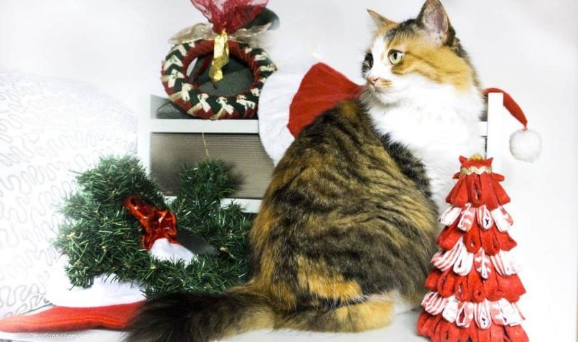 Albero di Natale a prova di gatto come metterlo in salvo