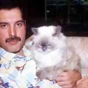 Freddie Mercury Delilah e tutti i suoi gatti