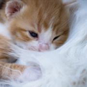 Quando il gatto fa la pasta perché e cosa significa