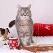 Sconti di Natale le migliori offerte sui pet shop