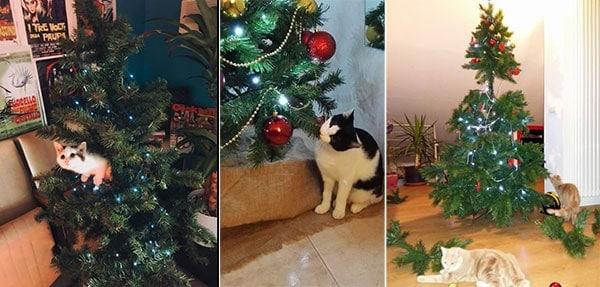 albero natale prova di gatto
