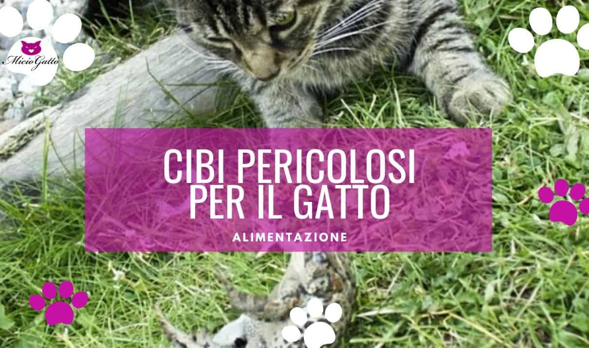 Cibi pericolosi per il gatto